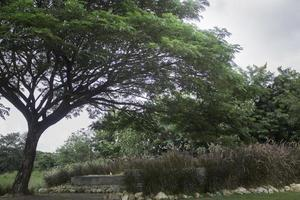 árbol en un campo de verano