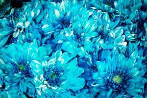 Blue flower background photo
