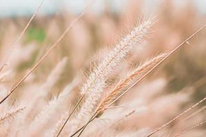 Wild Grass Flowers Field With Vintage Tone photo