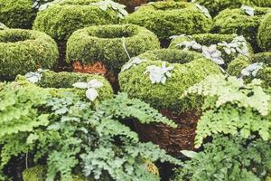 Moss-covered clay pots