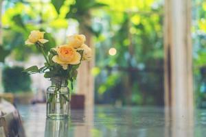 Peach roses in a vase