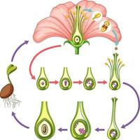 Diagram showing parts of flower vector