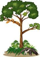 Serpiente en un árbol con un oso hormiguero sobre fondo blanco. vector