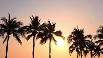Palm tree at sunset or sunrise time
