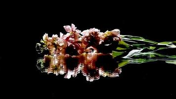 Flowers reflected on a black background photo