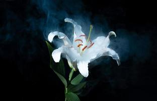 White lily and fog photo