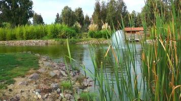 o lago e a floresta