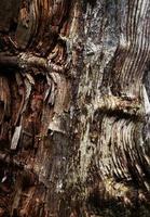 textura de madera rústica foto