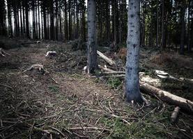 View of disforestation photo