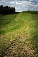 Green hills and trees photo