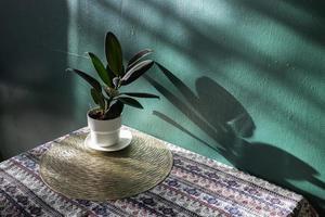 planta de interior verde en una mesa foto