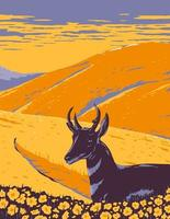 Pronghorn and Wild Flowers Growing in Native Grassland of Carrizo Plain National Monument in San Luis Obispo County California WPA Poster Art vector