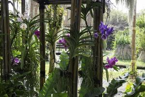 Colorful orchids in a garden photo