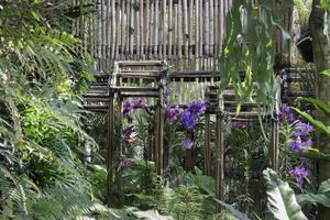Colorful orchid farm photo