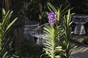 Beautiful purple flower in the garden photo