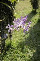 Colorful purple flower photo