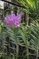 Pink flower in the garden photo