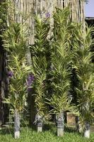 Tall green plants photo