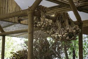 Garlic drying in a hut photo