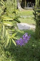 Purple flower in a garden photo