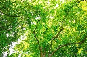 Green tree canopy background photo