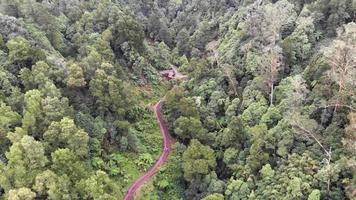 People walk meandering remote road on majestic forest. Establisher shot video