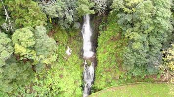 pequeno riacho em cascata descendo a vegetação exuberante ao lado da estrada na ilha de são miguel, açores