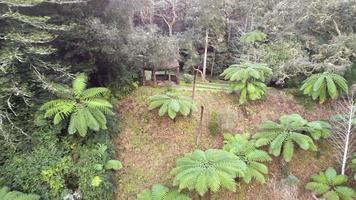 belo parque natural, lago e floresta. Ilha de São Miguel, Açores video