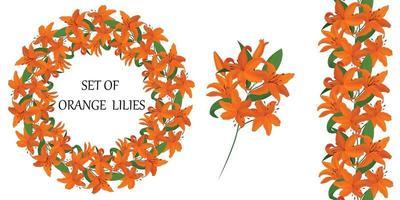 marco redondo con hermosas flores de lirio naranja. vector conjunto de elementos florales. cepillo sin costuras. una imagen colorida.