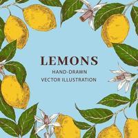 Marco de círculo dibujado a mano retro de limón con plantilla de espacio de copia vector