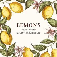 marco vintage con limones vector
