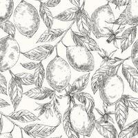 Limones dibujados a mano patrón de dibujo transparente de vector