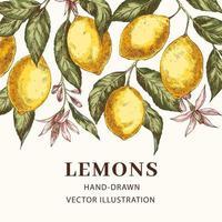 plantilla de cartel de vector dibujado a mano de limones
