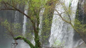 cachoeira atrás da árvore verde