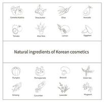 Nature ingredients of korean cosmetics. Vector illustration in hand drawn style