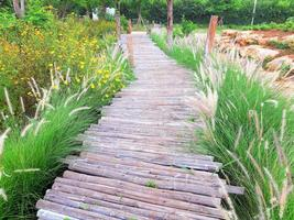 Wooden walkway bridge surrounded by grass photo