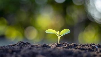 árboles pequeños con hojas verdes, crecimiento natural y luz solar foto