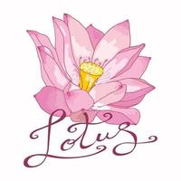 Vector image of a pink Lotus flower with original lettering on a white background. Delicate floral logo