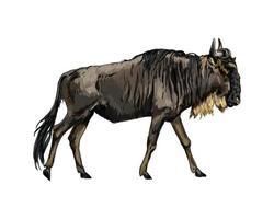 small realistic original watercolor wildlife illustration Wildebeest painting