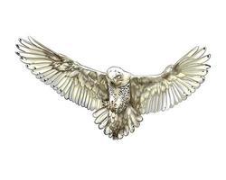 búho nival en vuelo dibujo coloreado, realista vector