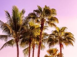 Beautiful tropical coconut palm trees