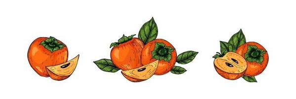 Set of hand drawn persimmon fruits with leaves isolated on white background. Vector illustration in colored sketch style