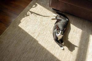 Tuxedo cat in the sun on the floor photo