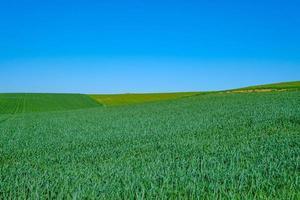 campo sembrado verde con cielo azul foto