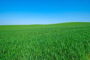 Grassy green field photo