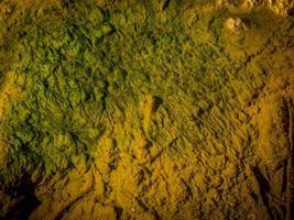 algas en el agua del río. foto