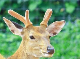 Close-up of a deer photo