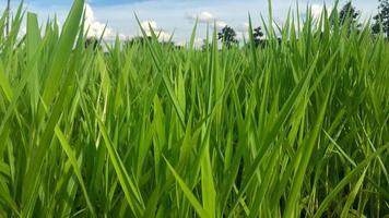 Close-up of a grass field photo