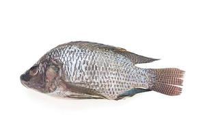 Raw fresh fish photo