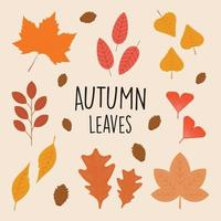 Collection set beautiful autumn leaves in flat color style vector